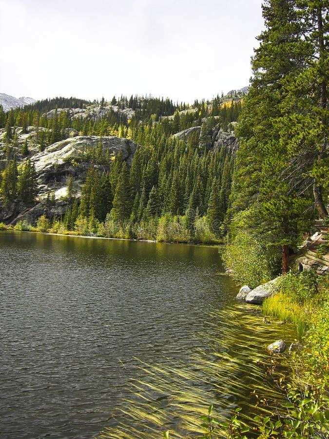 bomen en een meer in de bergen in de lente royalty-vrije stock afbeeldingen
