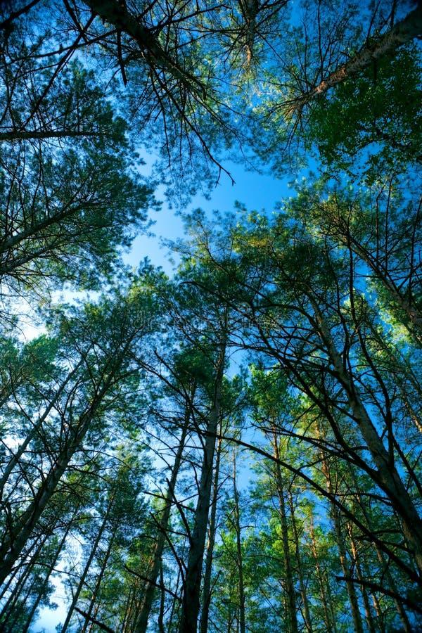 Bomen en Hemel stock fotografie