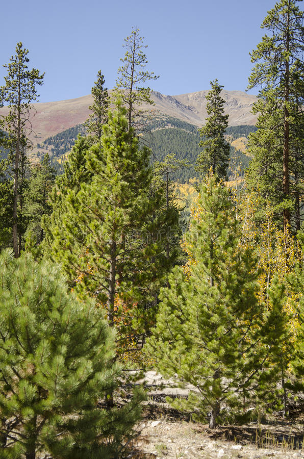 Bomen en het wild in Colorado royalty-vrije stock fotografie