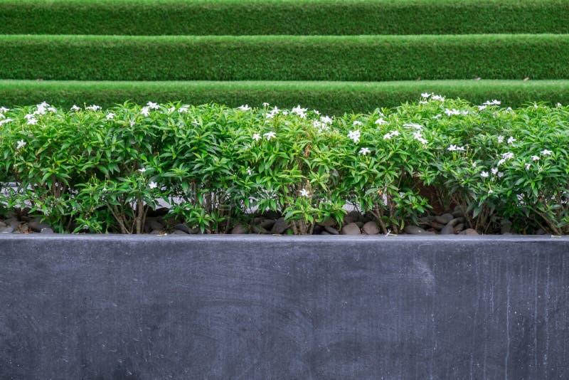 Bomen en kleine witte bloemen in grote concrete of marmeren potten in openbaar park royalty-vrije stock foto's