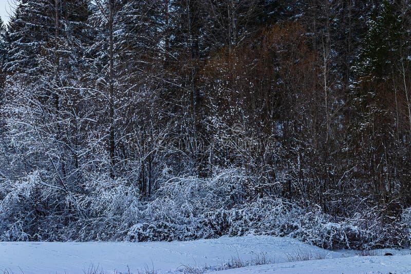 Bomen en kreupelhout gestold in witte sneeuw stock foto's