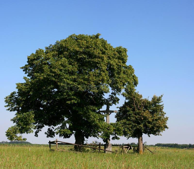 Bomen en kruis stock afbeeldingen