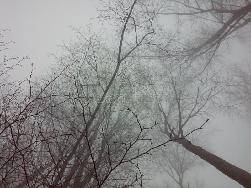Bomen en mist royalty-vrije stock foto