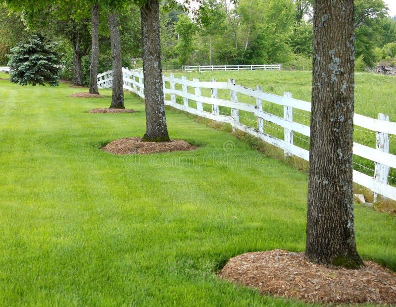 Bomen en omheiningslijn een Maine weiland royalty-vrije stock foto