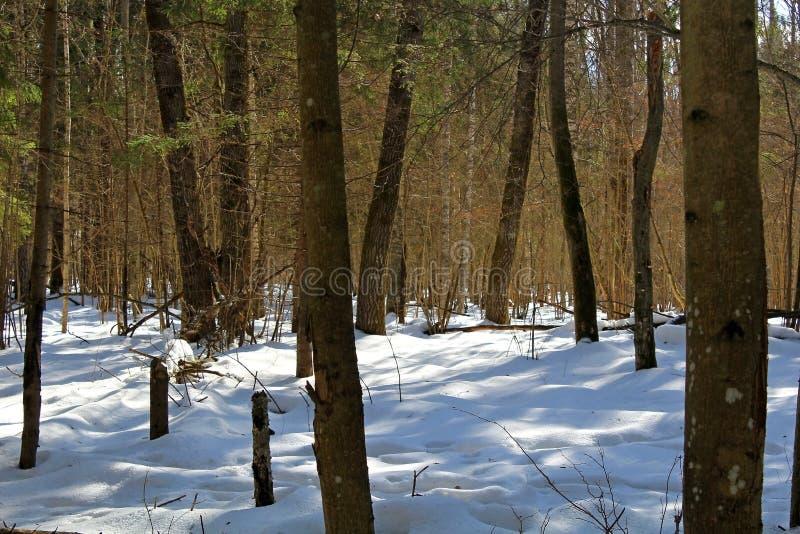 Bomen en struiken in centraal Rusland in de winter Een uniek beeld van het wild tijdens het koude seizoen vector illustratie