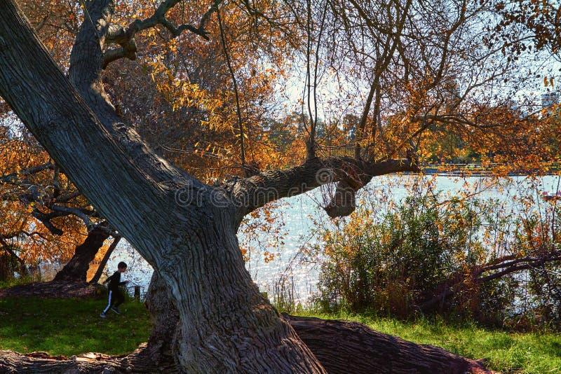 Bomen en vijver in het stadspark stock foto's