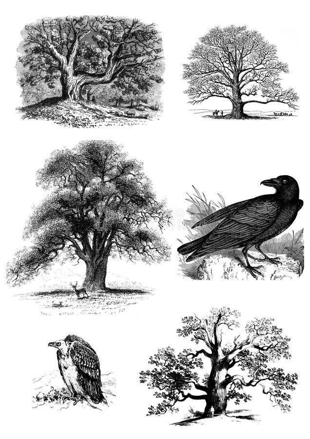 Bomen en vogelsreeks van illustratie stock foto's