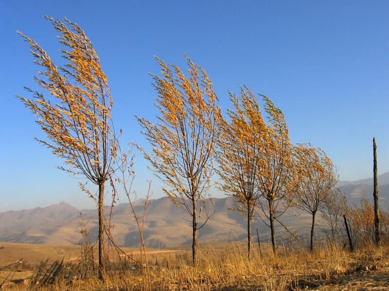 Bomen en wind royalty-vrije stock foto