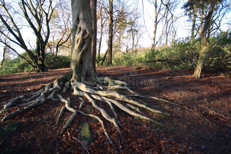 Bomen en wortels royalty-vrije stock foto's