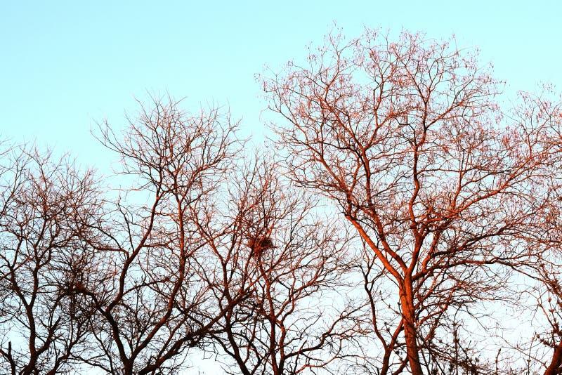 Bomen en zonsondergang stock afbeelding
