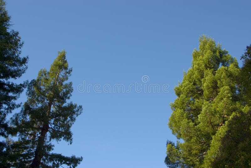 Bomen, frame hemel stock afbeelding