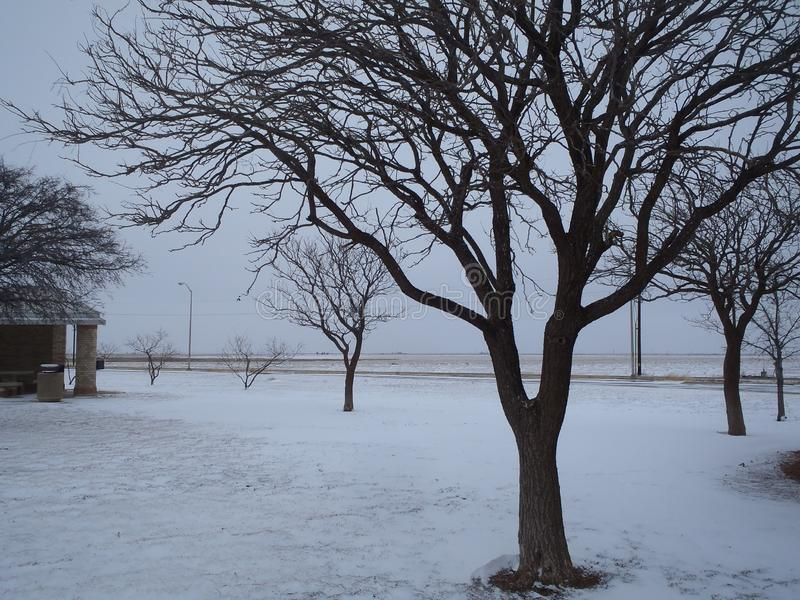 Bomen in Gelukkig, de V.S. royalty-vrije stock afbeeldingen