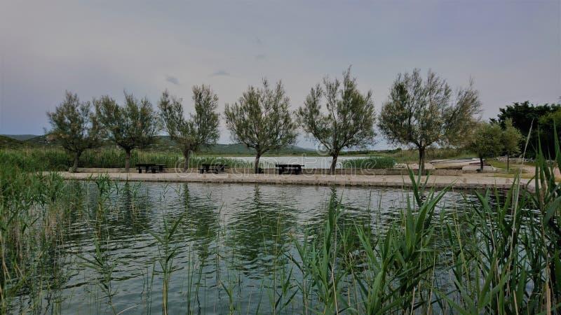 Bomen-gemeenschap aan de oevers van een Kroatisch meer royalty-vrije stock fotografie