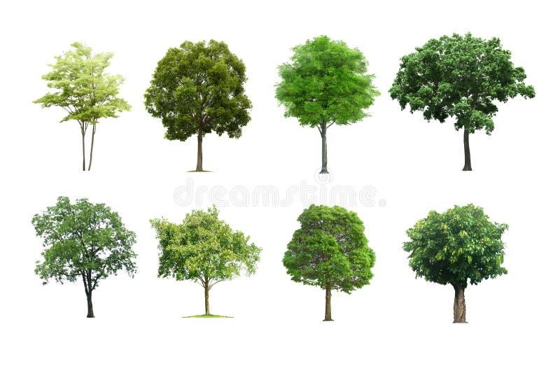 Bomen Geplaatst die op Witte Achtergrond worden geïsoleerd royalty-vrije stock afbeeldingen