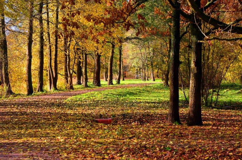Bomen in goud royalty-vrije stock foto's