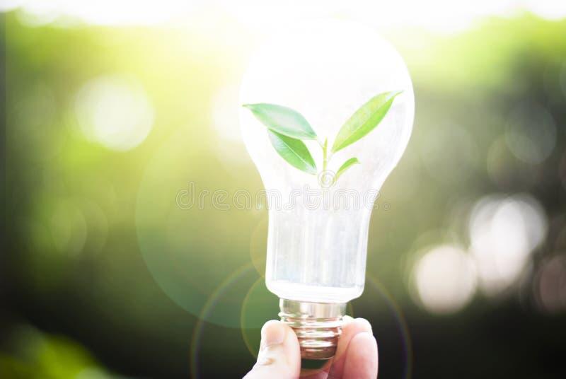 Bomen groeien in lampen Creativiteit op de Dag van de Aarde of Energiebesparing en Milieuconcepten royalty-vrije stock fotografie