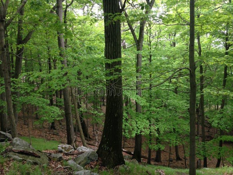 Bomen in Harriman-het Park van de Staat royalty-vrije stock afbeelding