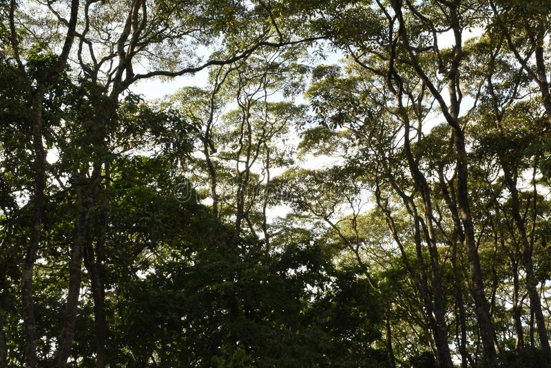 Bomen hemel, bladeren, dag, zonlicht, bos stock afbeelding