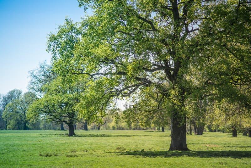 Bomen in het Alluviale gebied van de Rivier Sieg stock fotografie