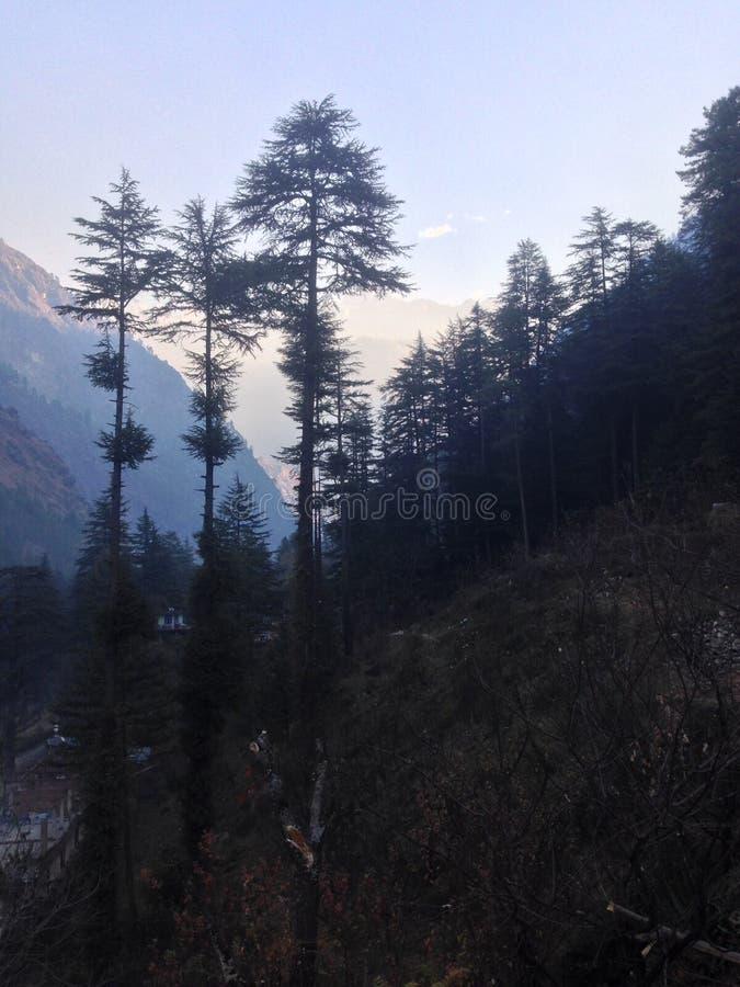 Bomen in het berglandschap royalty-vrije stock afbeeldingen