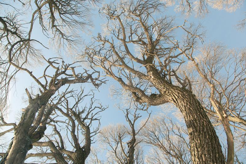 Bomen in het bos stock fotografie