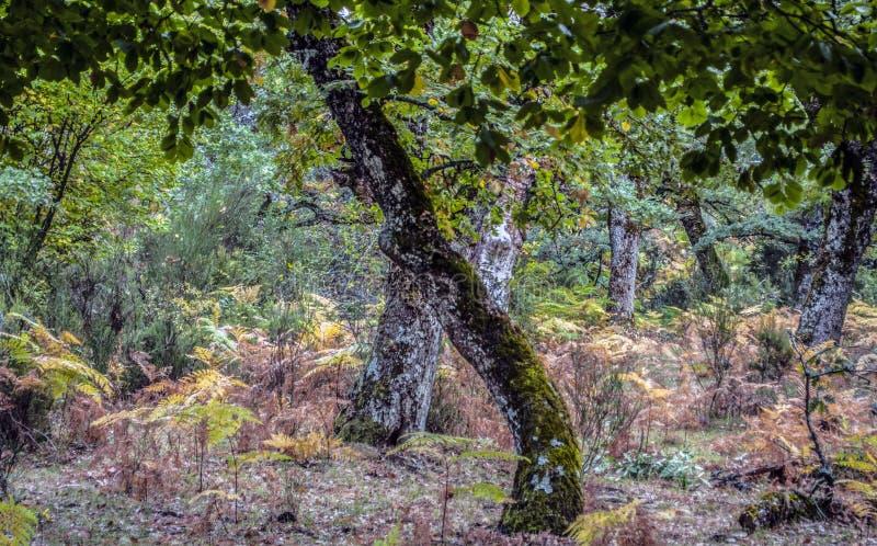 Bomen in het bos stock afbeeldingen