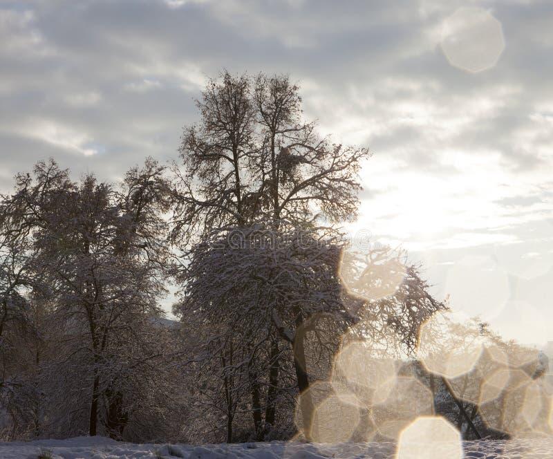 Bomen in het bos in de winter royalty-vrije stock foto