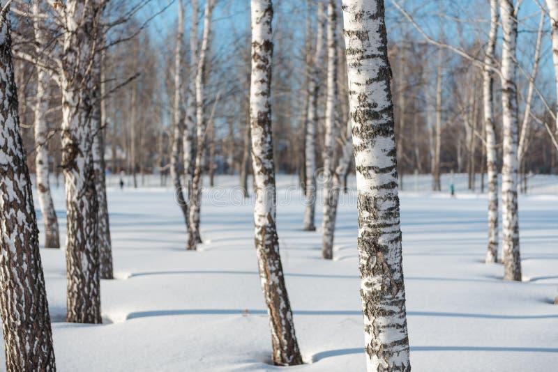Bomen in het bos de Winterlandschap van de de winter boswinter royalty-vrije stock foto