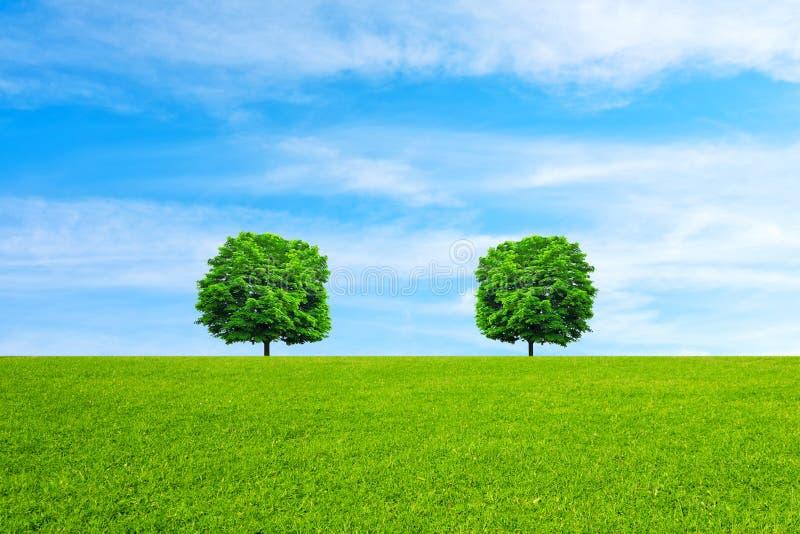 Bomen Het concept van de ecologie royalty-vrije stock afbeeldingen