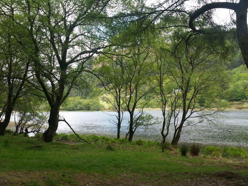 Bomen in het de Berg Nationale Park van Wicklow royalty-vrije stock afbeelding