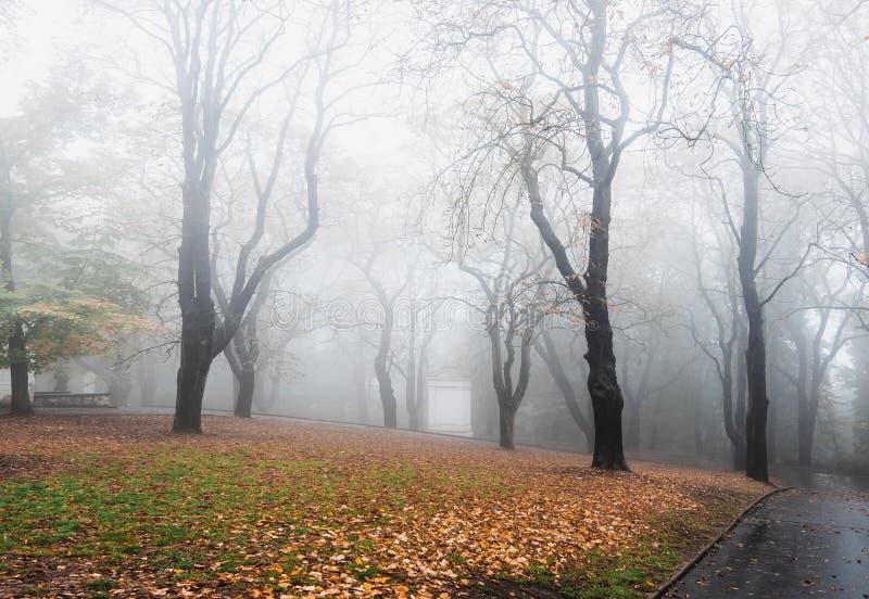 Bomen in het foggy- en troebel herfstbos royalty-vrije stock afbeeldingen