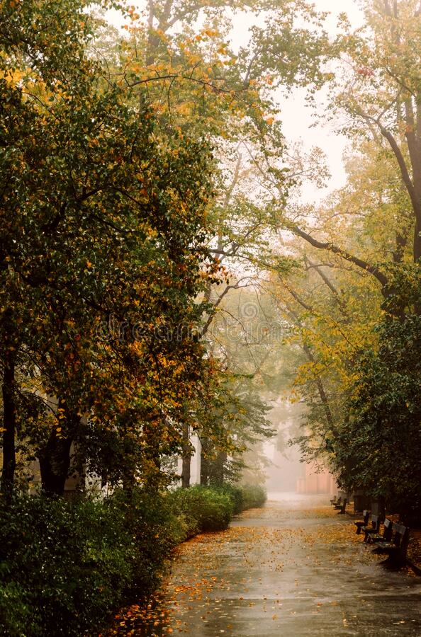 Bomen in het foggy- en troebel herfstbos stock foto's