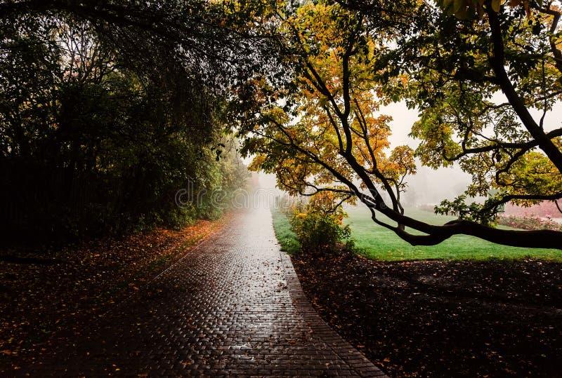 Bomen in het foggy- en troebel herfstbos Paving stenen alley stock afbeelding