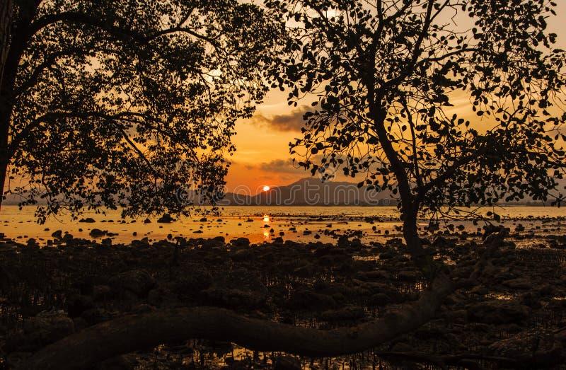 Bomen in het overzees met kleur van zonsondergang royalty-vrije stock afbeelding
