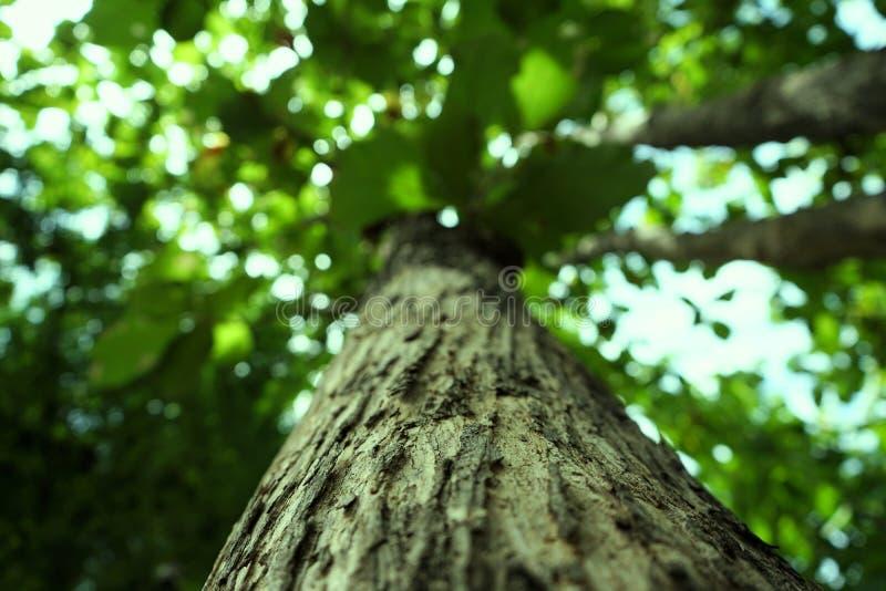 Bomen in het park en de spruit omhoog de hemel in Thailand stock afbeeldingen