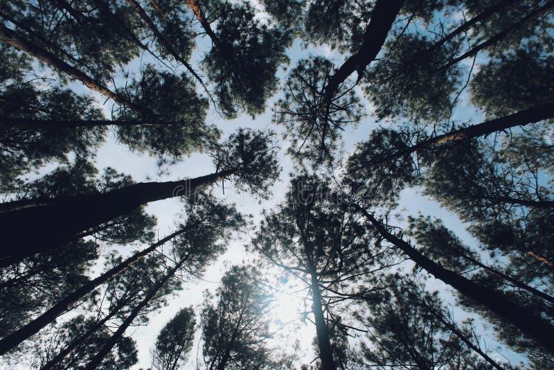 Bomen in het tropisland stock afbeelding