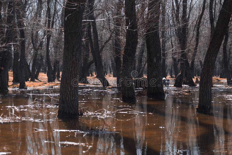 Bomen in het water Oranje gras Het kijkt als een andere wereld stock afbeelding