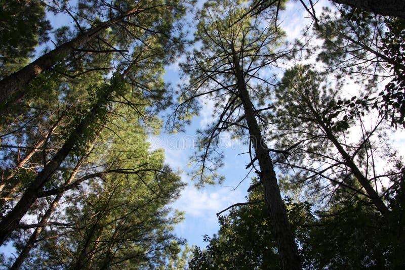 Bomen in het wilde natuurlijke zonlicht royalty-vrije stock foto