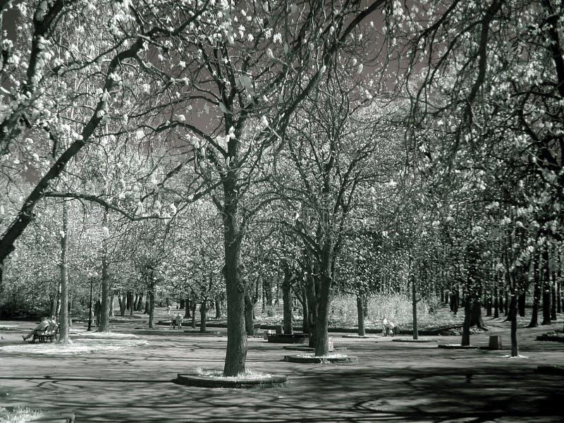 Bomen in IRL - infrared stock fotografie
