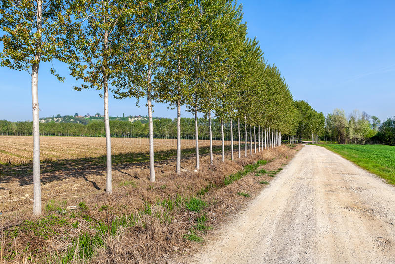 Bomen langs landweg in Italië royalty-vrije stock afbeelding