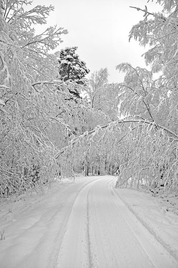 Bomen langs weg met sneeuw stock foto's
