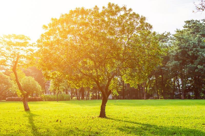 Bomen in Lumpini-park, Bangkok stock fotografie