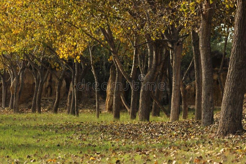 Bomen in Matsieng Lesotho royalty-vrije stock afbeeldingen