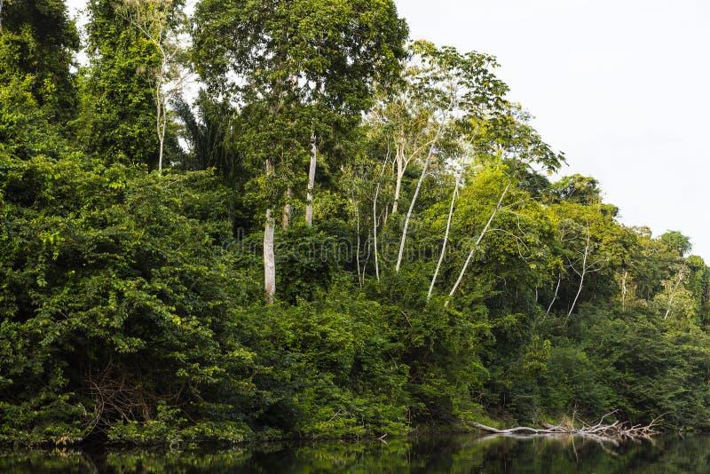 Bomen met bladeren langs rivier royalty-vrije stock foto's