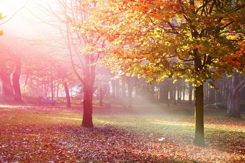 Bomen met de herfstkleuren vroeg in de ochtendmist stock afbeeldingen