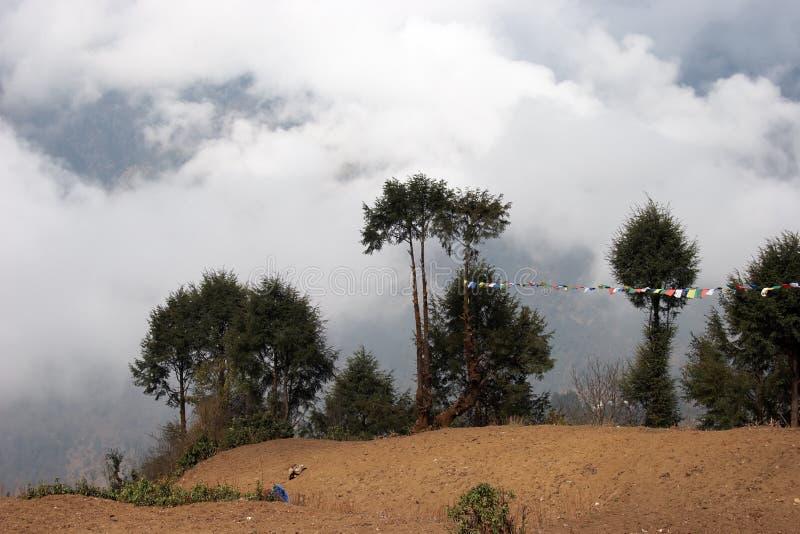 Bomen met gebedvlaggen, Everest trek, Nepal stock foto's