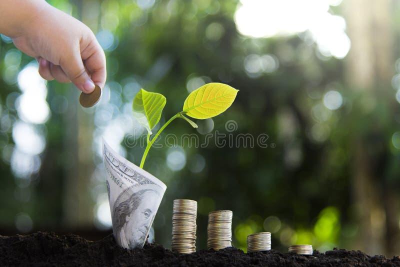 Bomen met geld die, die geld besparen en handen kweken stock foto's