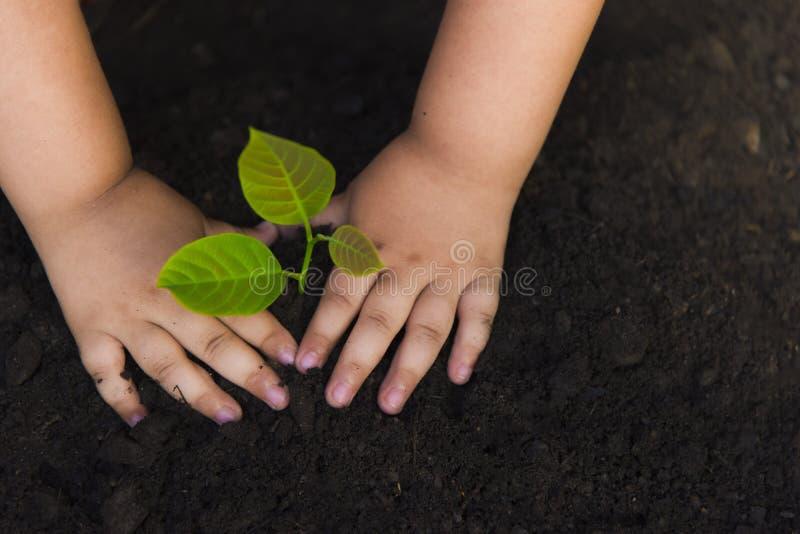 Bomen met geld die, die geld besparen en handen kweken Kinderen` s handen op zwarte grond worden geplant die royalty-vrije stock afbeelding