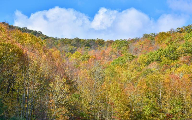 Bomen, met gele en scharlaken bladeren, hoog in de bergen worden behandeld die De scène van de herfst de kleurrijke achtergrond royalty-vrije stock fotografie