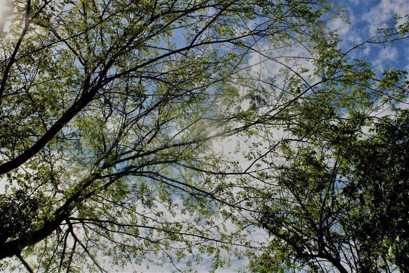 Bomen met groene bladeren royalty-vrije stock foto